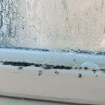The Truth about How to Get Rid of Mold (Hint: Stop Using Bleach)
